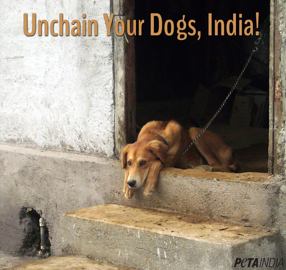 PetaIndia-unchain-your-dogs-India-lg-v1