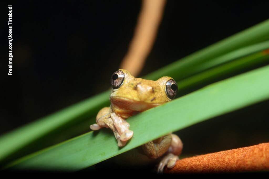 frog for virtual dissection software feature