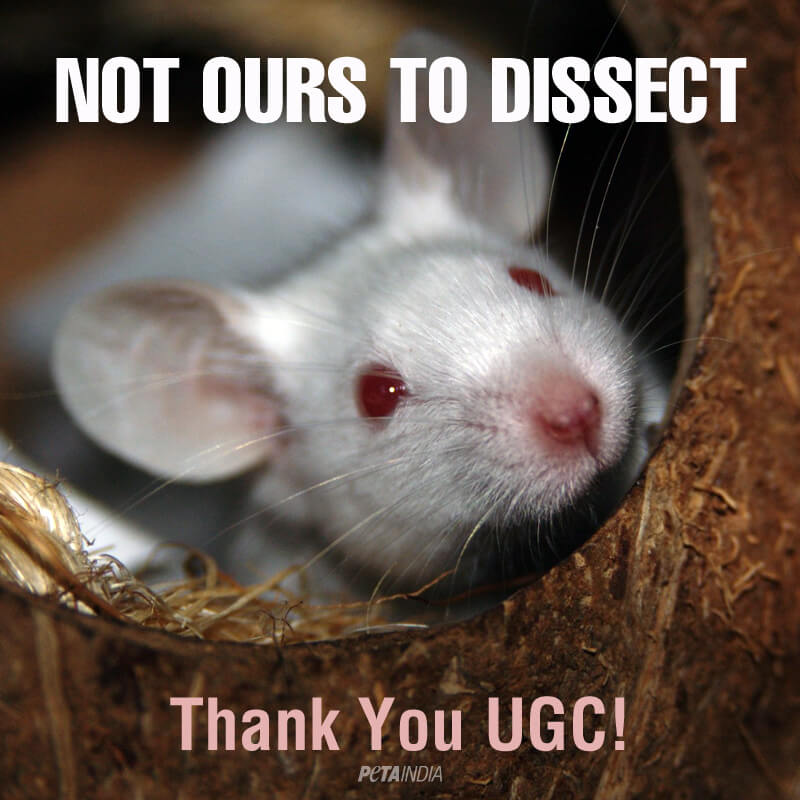 ugc_bans_all_dissection