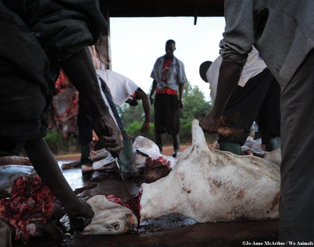 goat_beheading