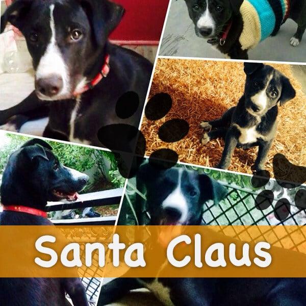 contest-santa-clause
