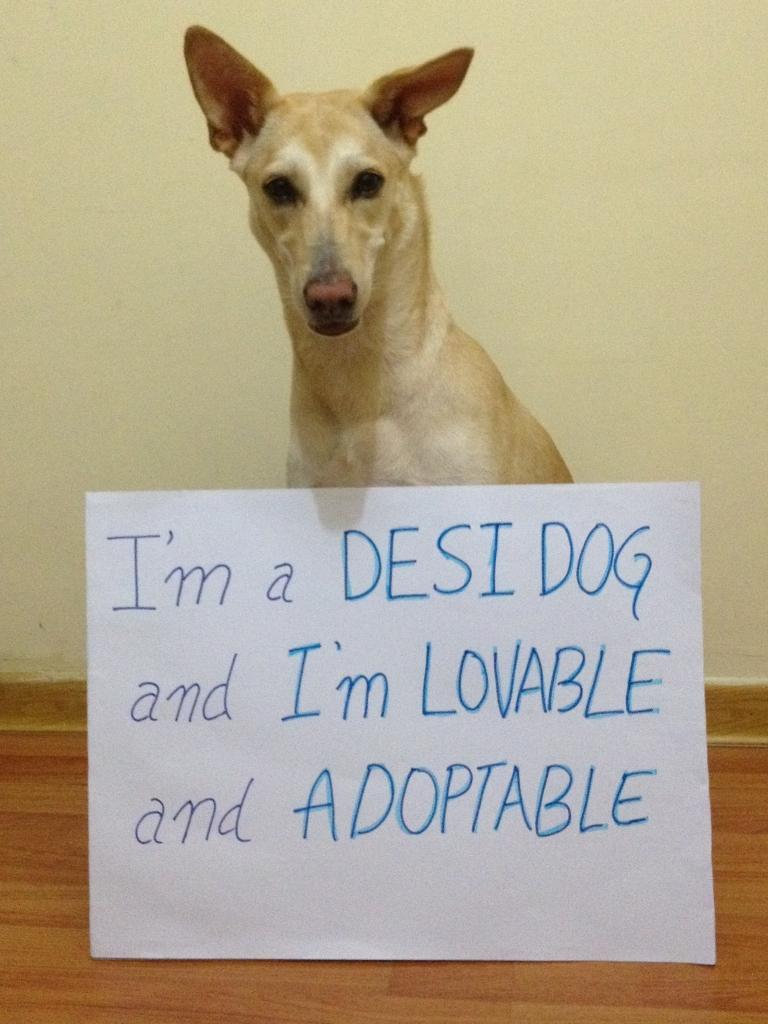 dog-adoption-peta