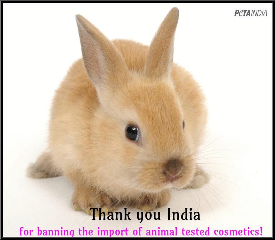 import_cosmetics_ban_bunny_1