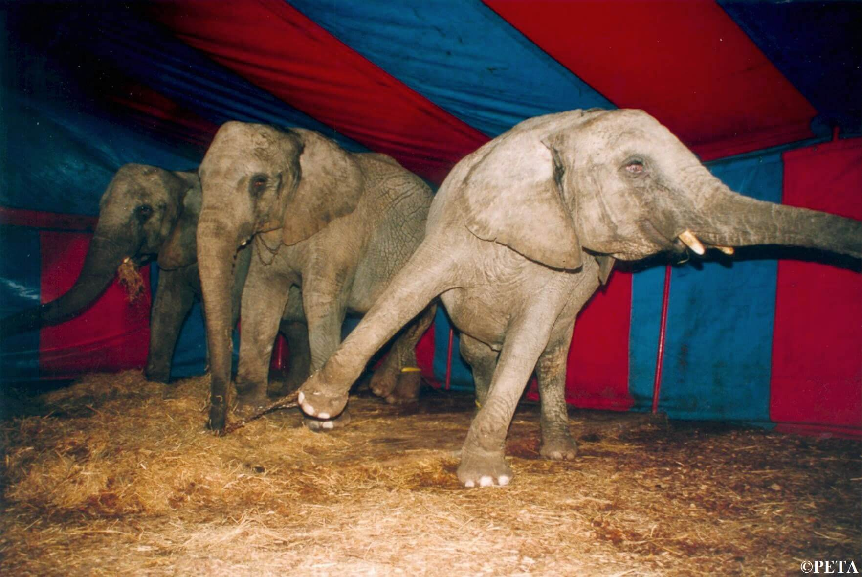 Animals Used for Entertainment