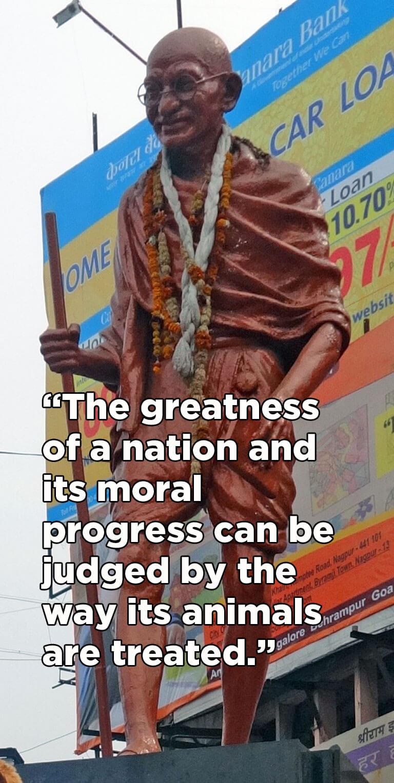 petaindia-blog-famous-people-quotes-mahatma-gandhi-v01