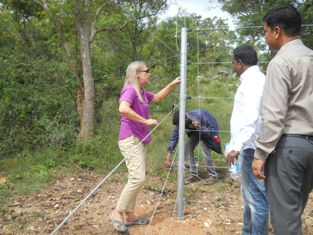 Carol Buckley inspecting the solar electric fence