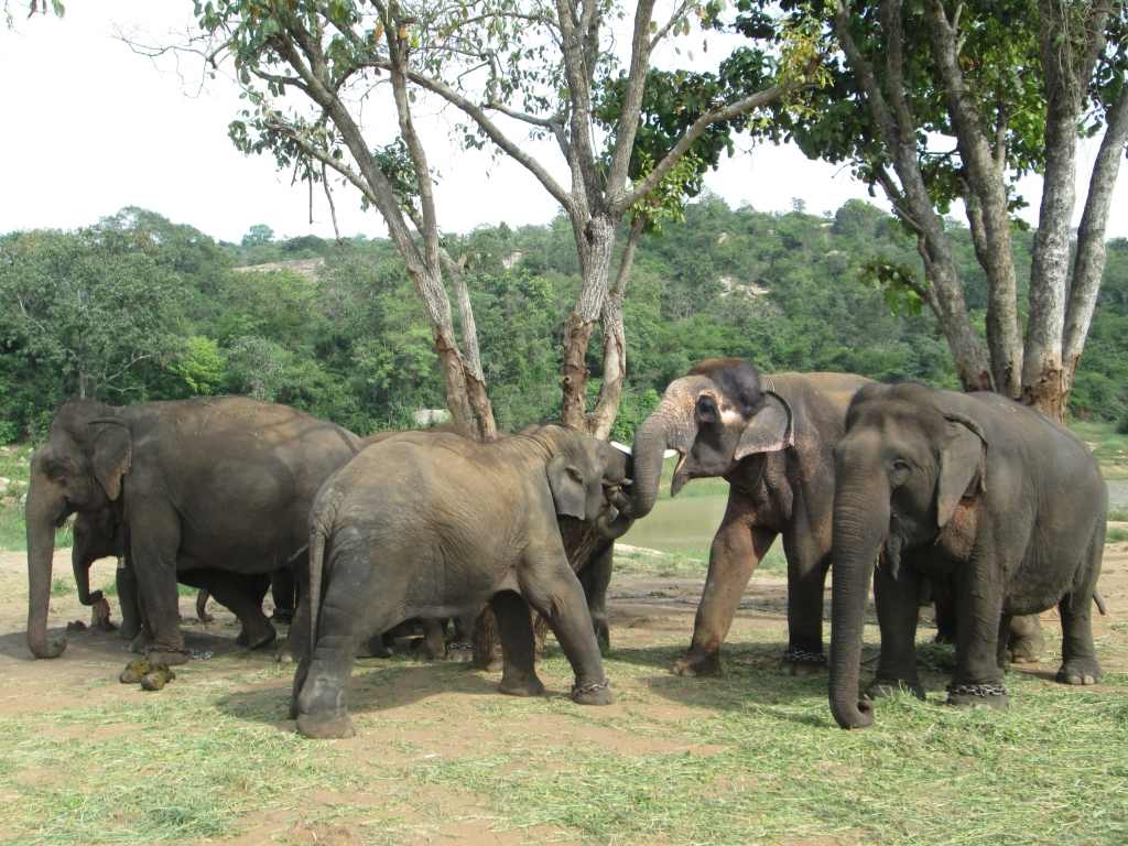 Sunder with his family.