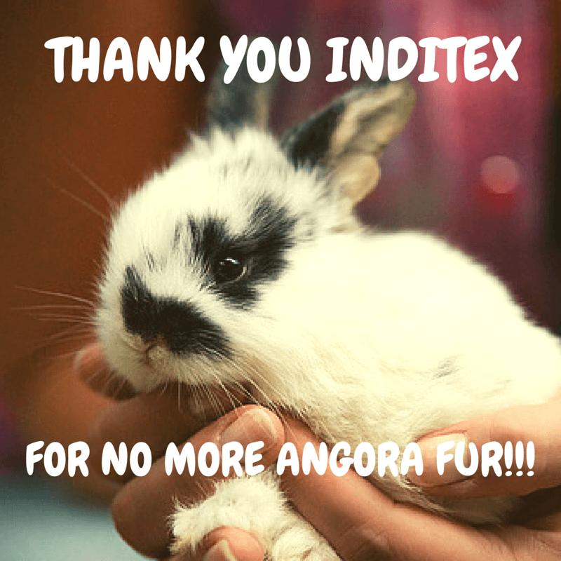 bunny-inditex-zara-angora-victory