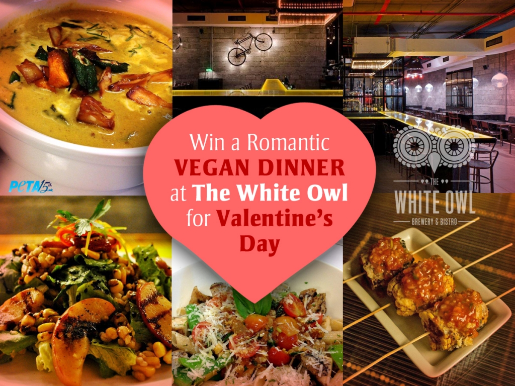 Revised White Owl Valentine's Contest