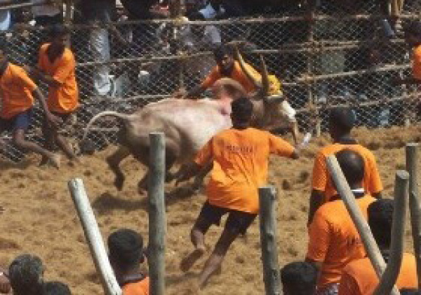 Urge Centre to Withdraw Notification Attempting to Allow Jallikattu, Bull Races