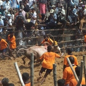 Here's Proof That Disregard for Animals in Jallikattu Leads to Disregard for Humans