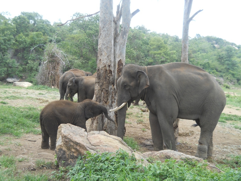 17 pic of sunder journey feature