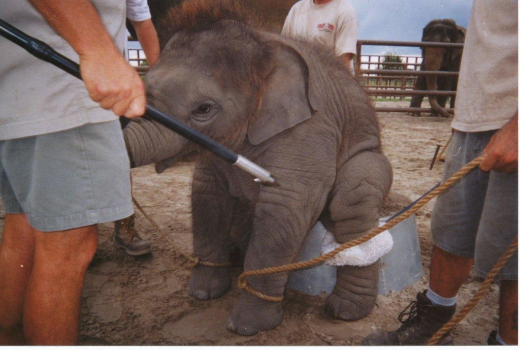 Ringling Bros To Stop Elephants Acts