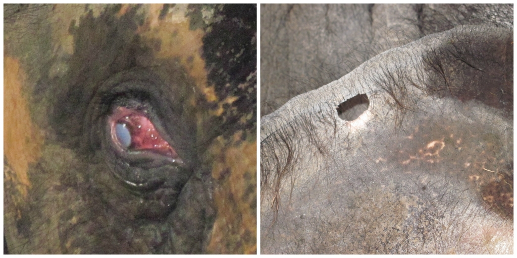 Collage of Sunder's eye and hole in ear