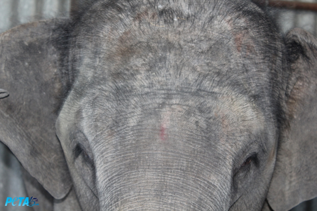 Suman  had a severe skin infection with eczematous patches noticed on the forehead copy