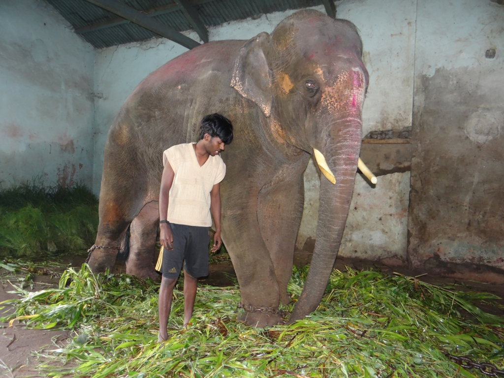 Sunder back in drak shed with chains_11 August 2012