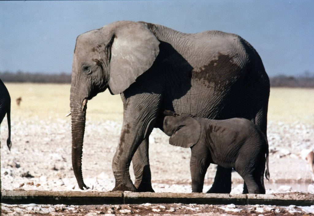 ppub_portraits_2_elephants_001