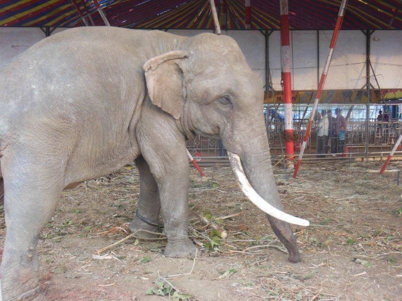 animals in moonlight circus (1)