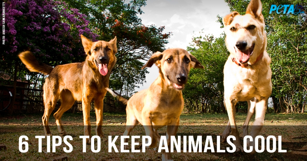6 Tips for Helping Animals Survive the Summer Heat