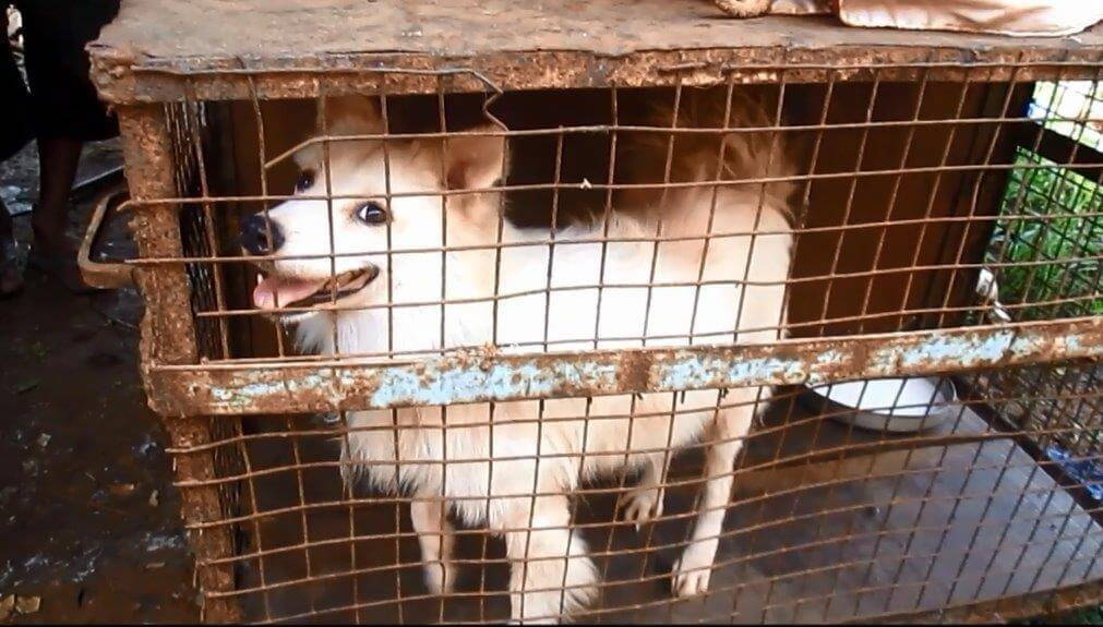 Dog in filthy cage