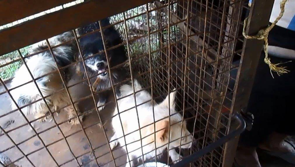 Dogs cramped in cages