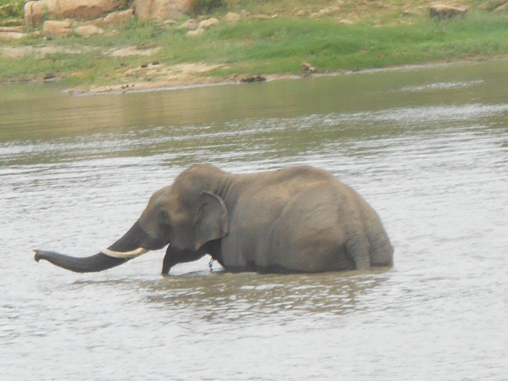 Sunder taking a dip at BBP