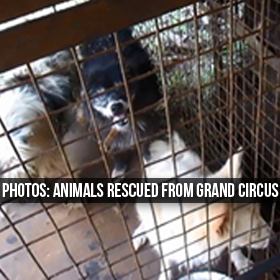 Photos of Animals Rescued from Grand Circus