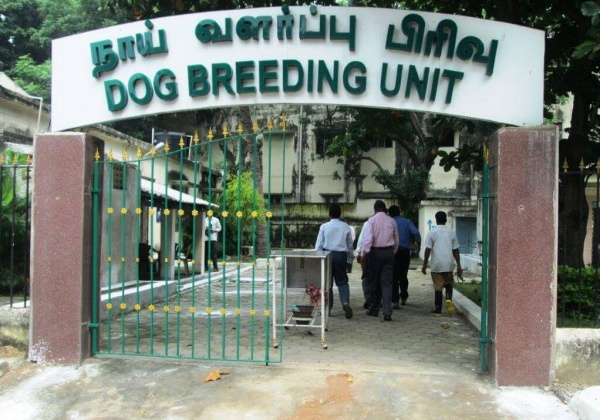 Madras High Court Orders Closure Of State-Run Dog-Breeding Facility
