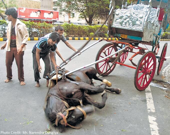 Horse that fainted for 20 mins due to exhaustion on Marine Drive. PHOTO BY MID DAY