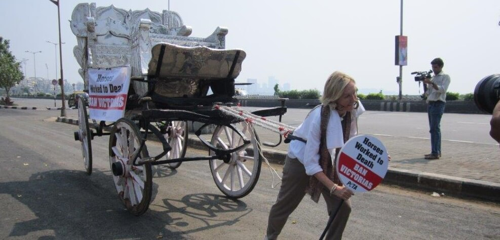 Ingrid-campaign-horse-carriages-Bomday