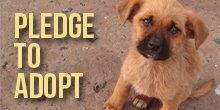 Action-button-pledge-to-adopt