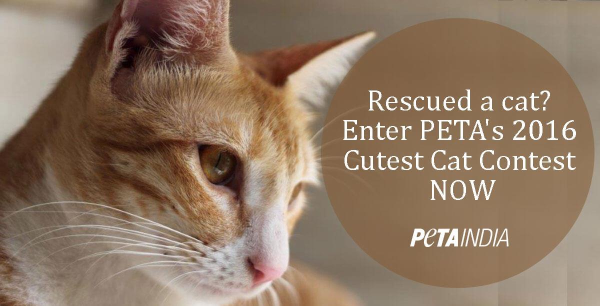 Cutest_Cat_Contest_PETA-India-2016