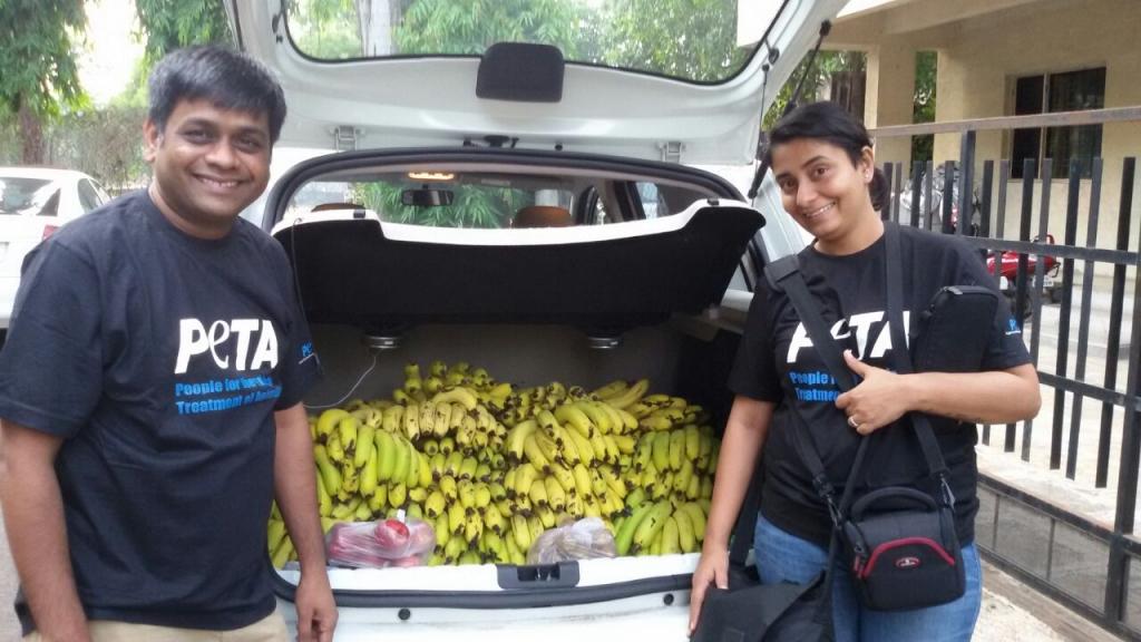 bananas-for-monkey-family