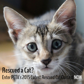cutest rescued cat home page thumbnail 280 by 280