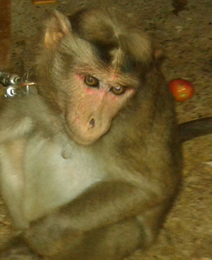 kidnapped-baby-monkey-rescued