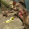 monkeys-family-576x1024