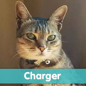 petaIndia-cutestCats-2015-charger-280px