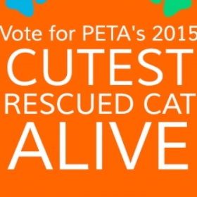 petaindia-social-cutest-cat-contest-2015-v2 - 280 by 280