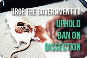 Action-button-dissection-ban
