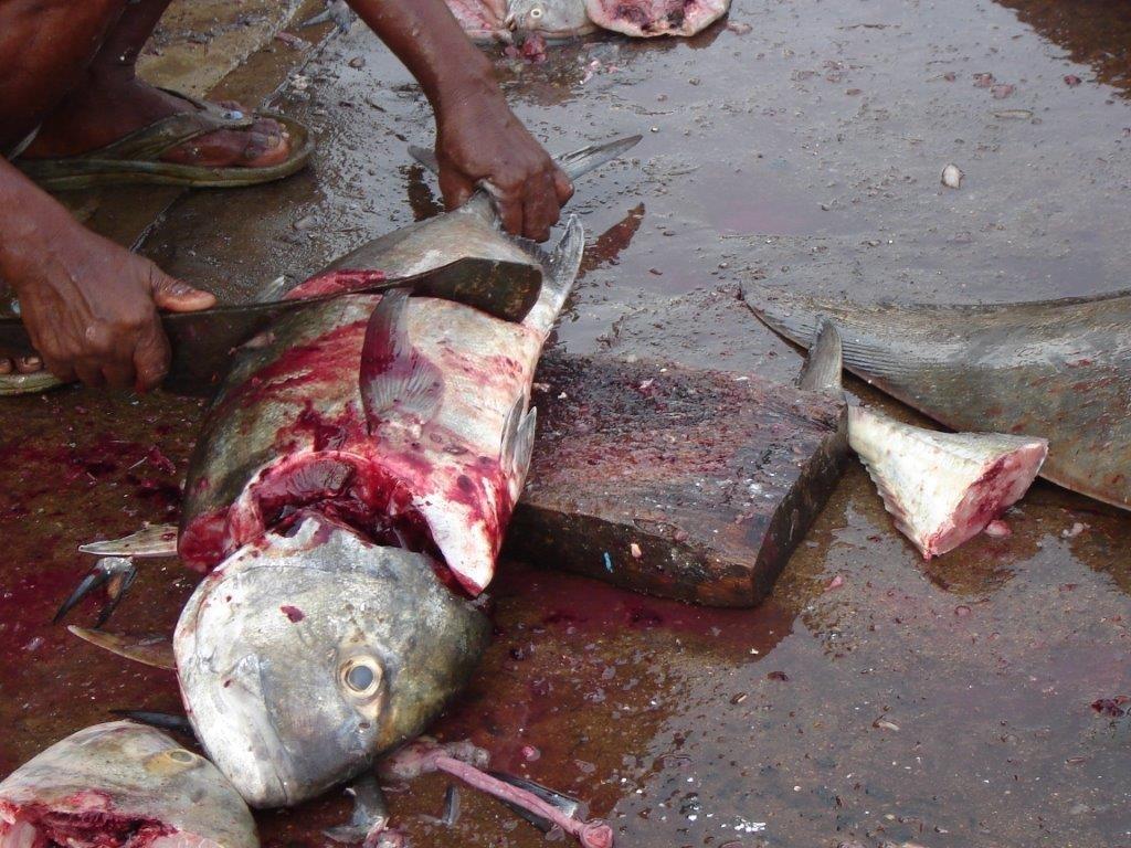 Fish cruelty