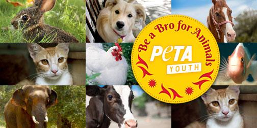 petaIndia-social-rakhi-animals-facebook-504x252-yellow-v02