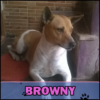 """Browny was just 2 months old when he was rescued by Supriya  from a pit he had fallen into. Supriya took him home and loves him like a """"little brother""""."""