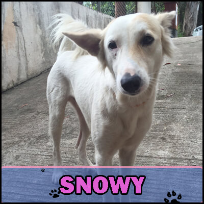 Snowy was found huddling in a dirty corner, shivering. He had painful scabs on his back. Nambiar took him to a vet, and after several weeks, his health improved. Snowy now has a special place in Nambiar's heart and home.