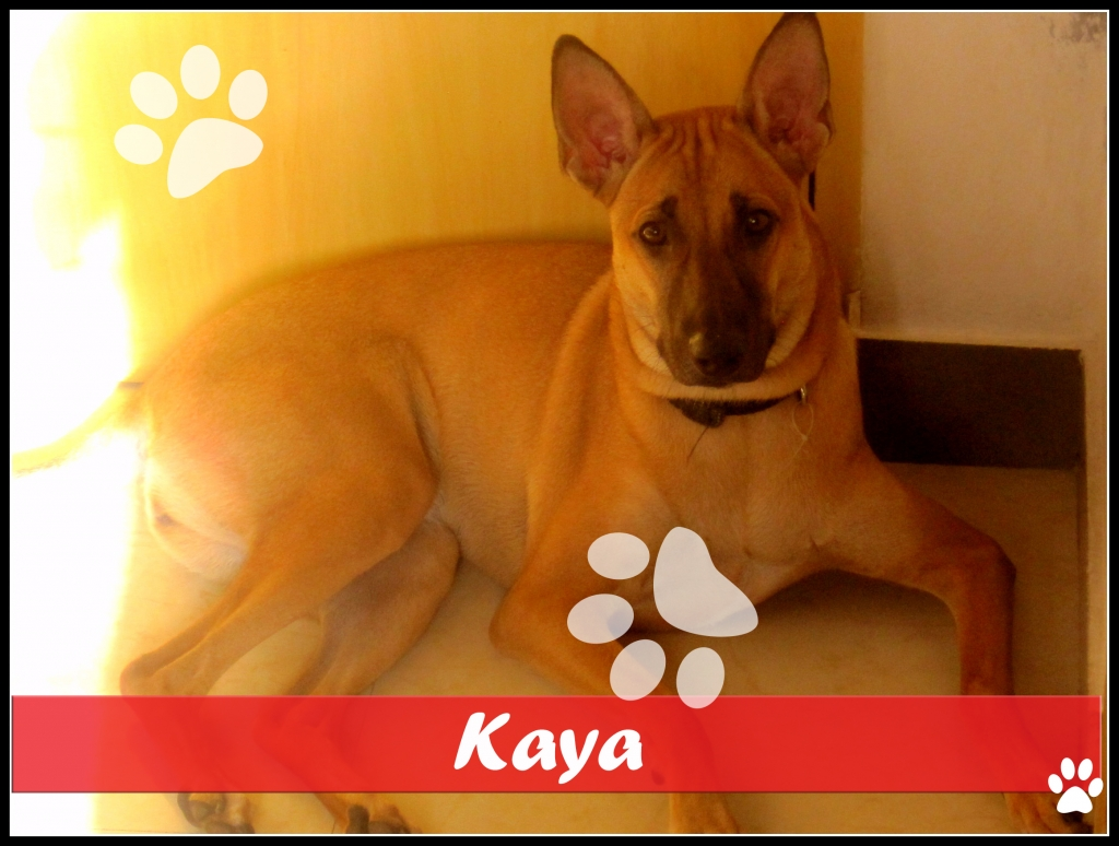 Krithika could not leave little Kaya alone after she found her roaming around a construction site. Kaya was taken to the veterinarian and vaccinated, and now she lives with Krithika and her family.