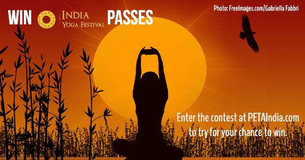 yoga festival contest fb thumbnail