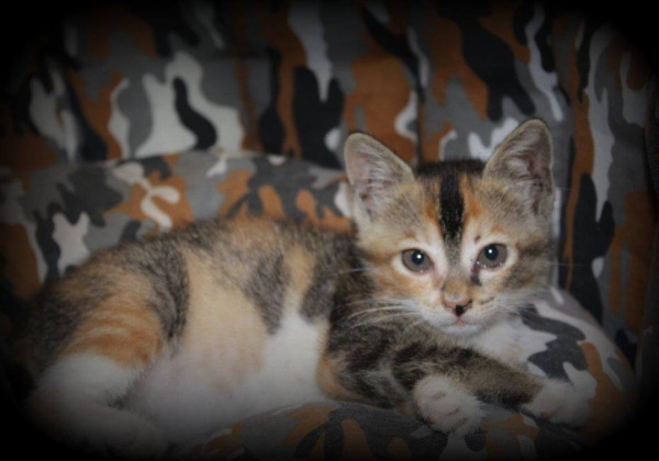 Tortoiseshell-Coloured Kitten Up for Urgent Adoption