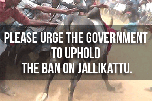 16 Bizarre Myths Promoted by Jallikattu Supporters Busted