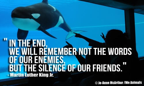 Martin Luther Quote 1 FINAL2orca_2D00_silence_2D00_friends1