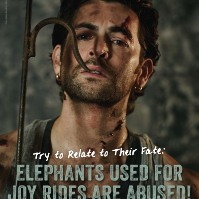 Neil Nitin Mukesh Shows How Elephants Are Beaten, Shackled, and Abused for Rides