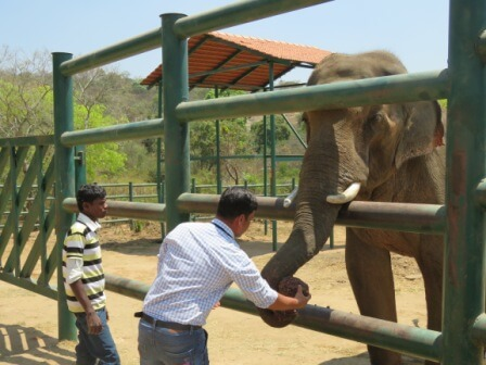 16 Feeding of Raggi balls to Sunder - 06.03.2016